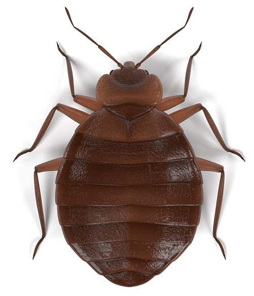 Bed Bug Pest Control In Jackson Ms Integrated Pest Services